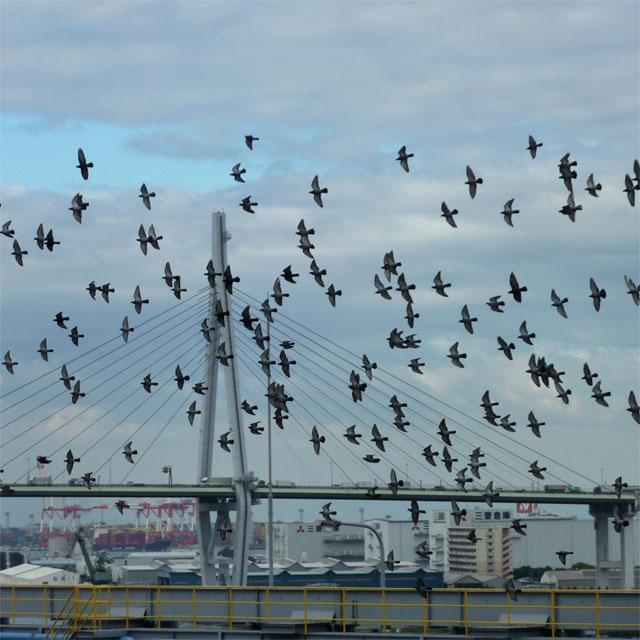 集団で飛び交う鳩
