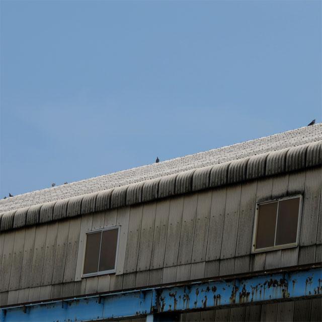 工場の屋根に群がる鳩