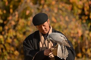 諏訪龍鷹匠と鷹